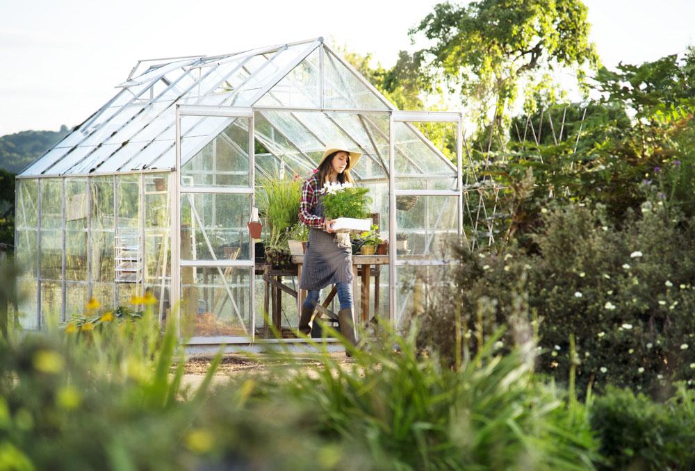 Jak samodzielnie zbudować szklarnię ogrodową?