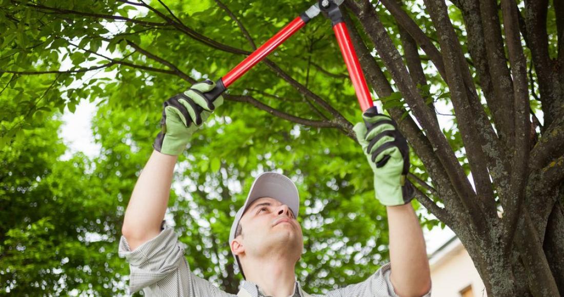 Przycinanie drzew owocowych na wiosnę - jak to zrobić prawidłowo?