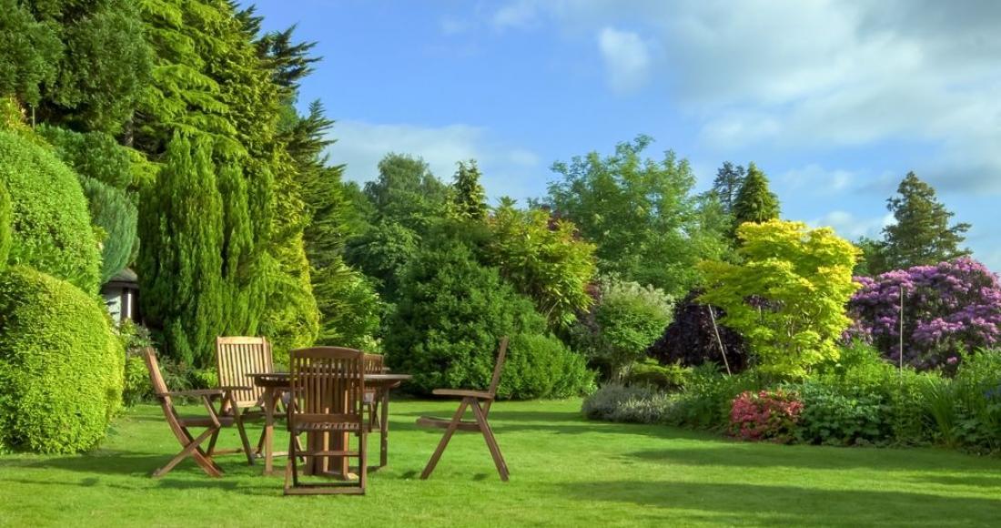 Jaką trawę zasiać w ogrodzie? Jaki gatunek trawy wybrać?