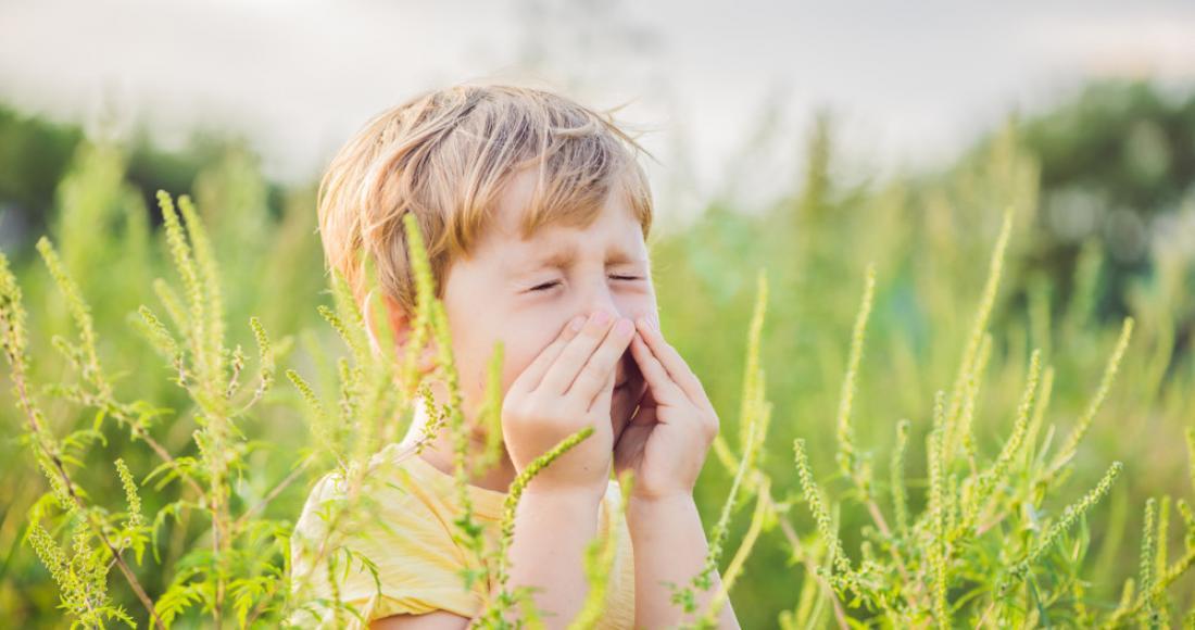 Na ratunek alergikom - czym jest, jakie ma objawy i jak diagnozować alergię?