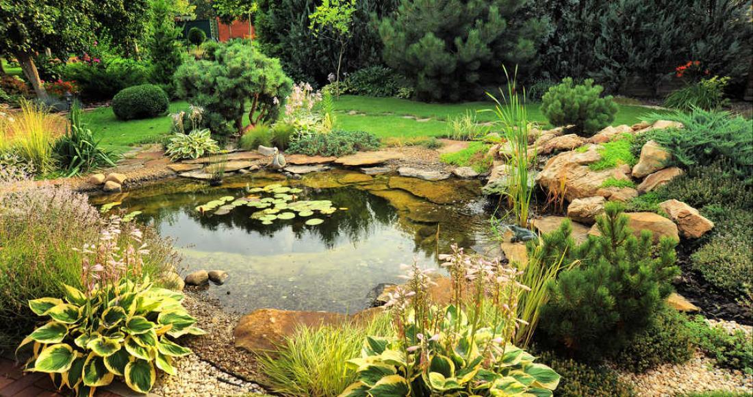 Woda w ogrodzie - jak urządzić oczko wodne i dlaczego warto?