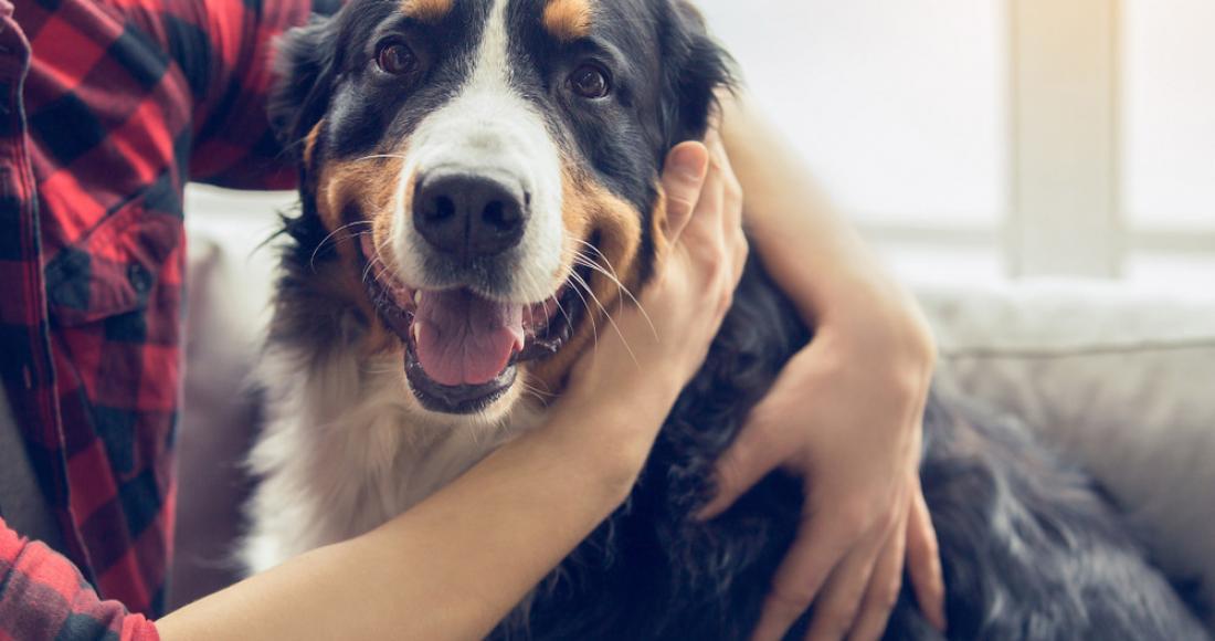 Pies w domu. Jak urządzić przestrzeń dla niego, by było funkcjonalnie, bezpiecznie i estetycznie zarazem?