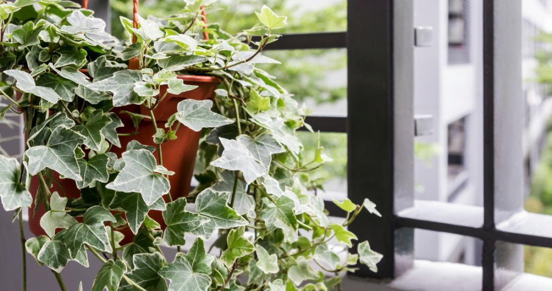Piękne, ale trujące rośliny domowe i ogrodowe. Czego unikać, mając małe dziecko i zwierzęta?