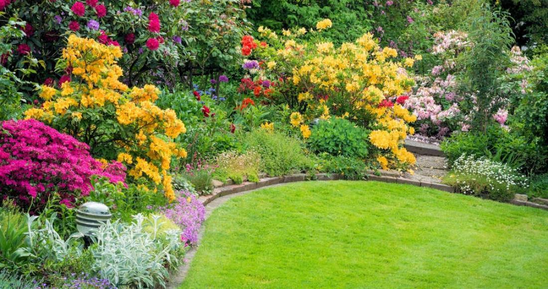 Ogród wiecznie zielony – jakie gatunki roślin zasadzić, by ogród kusił cały rok?