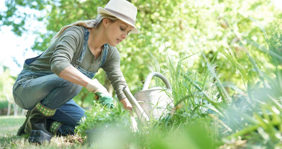 Szkodniki w ogrodzie – jak pozbyć się ich w sposób bezpieczny i ekologiczny?