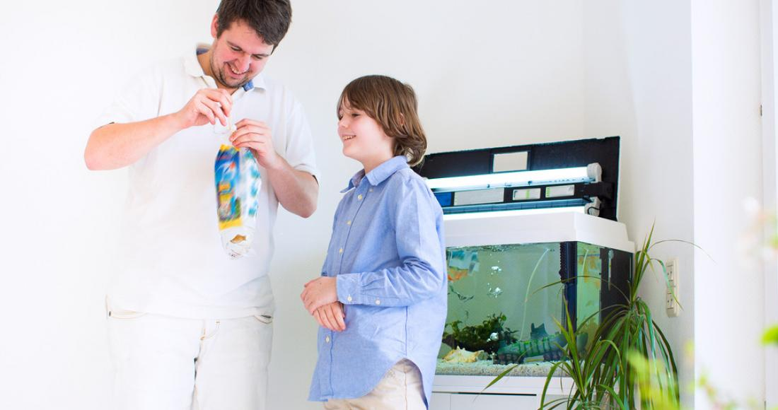 Wyposażenie akwarium – niezbędne sprzęty i akcesoria